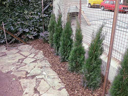 Pflanzarbeiten gartengestaltung ing gerold reischl for Gartengestaltung 1230 wien
